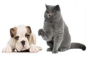 Корма кошек и собак