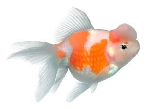 Корма для рыбок